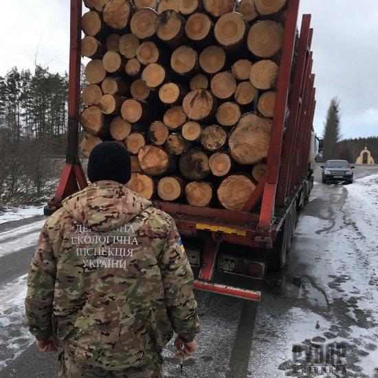 Екологами та правоохоронцями викрито групу осіб які займаються крадіжкою лісу