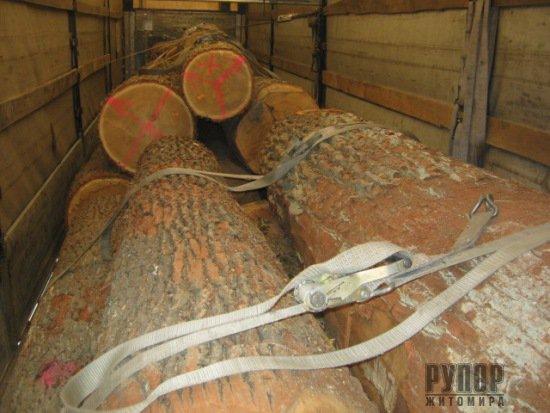 Як розкрадають ліс на Житомирщині. ФОТО