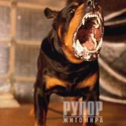 В Житомирській області скажений собака покусав обличчя своєму господарю