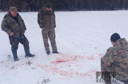 Столичні браконьєри вже полюють на Житомирщині. ФОТО