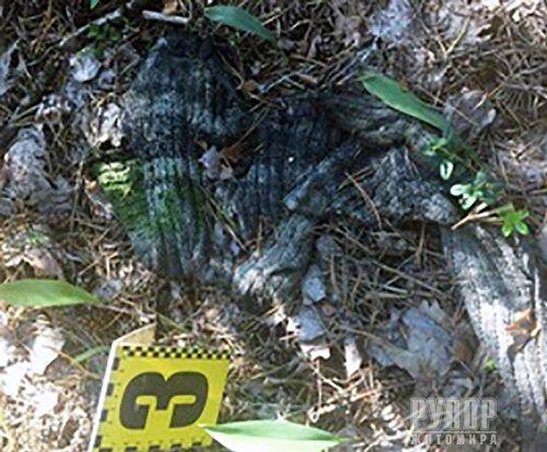 В лісовому масиві на Житомирщині виявили рештки чоловіка. ФОТО