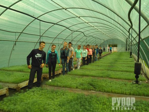 Щорічно в Новоград-Волинському лісгоспі вирощується близько 2 мільйонів сіянців