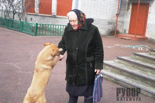 У Коростені нагородили школяра, який, ризикуючи життям, врятував собаку з крижаної пастки на річці Уж