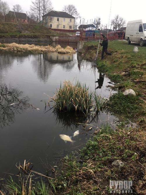 На Житомирщині встановлено факт загибелі риби. ФОТО