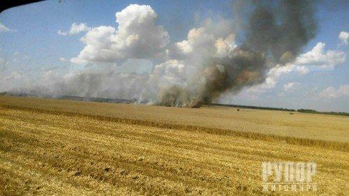 В Житомирській області загорілись посіви пшениці на площі 3,5 га
