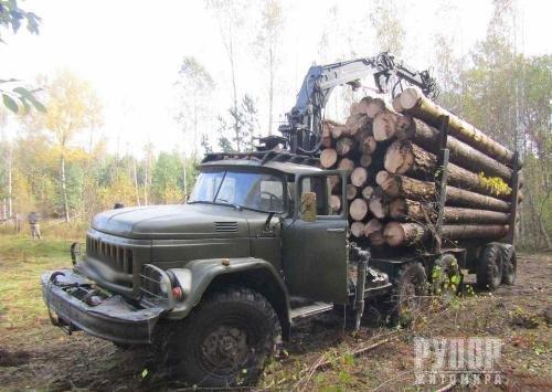 У північних районах Житомирщини викрито чергових підпільних лісорубів