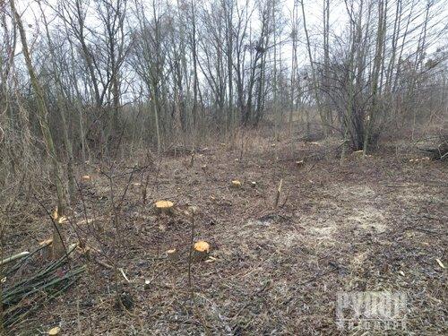 В межах міста Житомир вирізають дерева. ФОТО