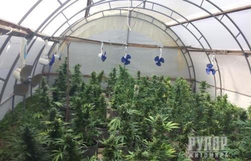Поліцейські Житомирщини вилучили в полісян майже 18 тисяч нарковмісних рослин